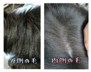 犬の毛ダブルコート