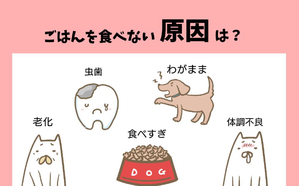 愛犬が食欲ない原因