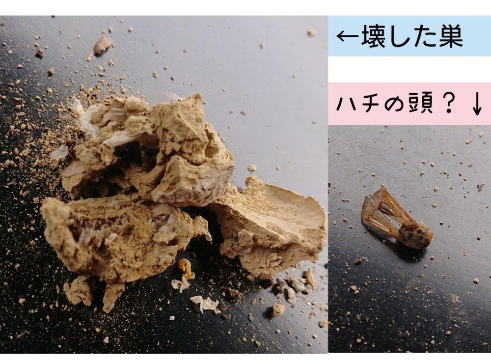 壊したドロバチの巣